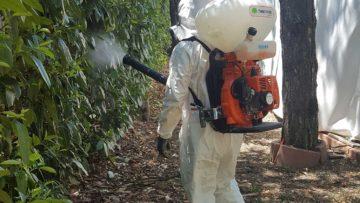 Disinfestazione zanzare (2)